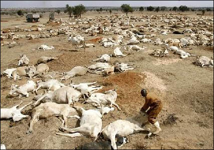 Famine in Africa - another weapon of mass destruction